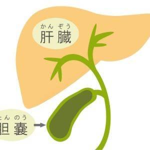 【陰ヨガで内臓ケア】なんとなく不調を改善!肝臓・胆のうの滞りを解消しストレスを和らげる陰ヨガ