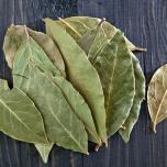 月桂樹 活用法