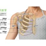 肩帯 筋肉