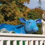 アニマルヨガ 牛 猫 キャットアンドカウ