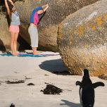 アニマルヨガ ペンギン