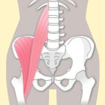 股関節まわりの筋肉