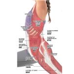 腰椎周辺 筋肉