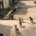 インドの動物