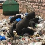インドのゴミ捨て場
