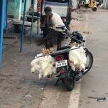 精肉店へ運ばれるニワトリ