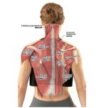 首のコリや痛みの原因を理解しよう|ヨガ解剖学