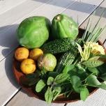 沖縄の野菜と果実
