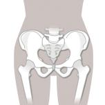 股関節は、骨盤と大腿骨のつなぎ目。色々な動きを行いながら、骨盤側の寛骨臼と、大腿骨頭のすべりをよくすることが、股関節の可動域を広げるコツです。