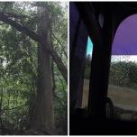密林に突如現れる遺跡