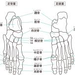 足の骨 足 立つ グラウンディング