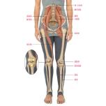 体の仕組みを学ぼう 土台から関節の位置を整えよう