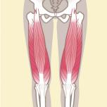 大腿四頭筋 筋力不足を防ごう|下半身6筋群の筋力をチェックする方法【理学療法士監修】