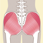 臀筋群 筋力不足を防ごう|下半身6筋群の筋力をチェックする方法【理学療法士監修】