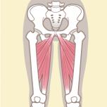 内転筋群 筋力不足を防ごう|下半身6筋群の筋力をチェックする方法【理学療法士監修】