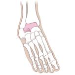 足首まわりの2つの筋肉の鍛え方①