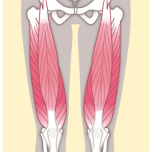 柔軟な股関節・真っすぐな膝へ導くポーズ|前腿にある「大腿四頭筋」を鍛えよう