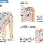 肩甲骨の動き6方向