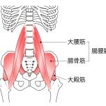 大殿筋 理学療法士が推奨する、下半身の筋力を向上させるたった1つのゴールデンエクササイズとは?