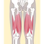 ハムストリング 理学療法士に聞く伸展のための柔軟性|うつ伏せでかかとがお尻につく?