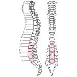 骨盤&呼吸筋を整えて血流を促す