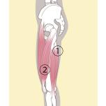 前屈が一瞬で上達!「腸腰筋・大腿四頭筋」を鍛える3ステップ
