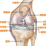 体の仕組みを学ぼう|膝を守ろう