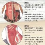 体幹 コア 解剖図