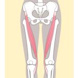 スムーズに動く股関節へ「戦士のポーズ」に必要な3つの筋肉とは