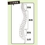 背骨をほぐして柔軟性アップ|頸・胸・腰椎、仙骨の動かし方