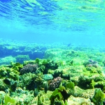 海とサンゴ礁
