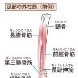 前脛骨筋など脛の筋肉