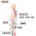脚、背部の筋肉