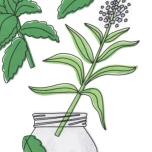 【レシピ】熱中症対策にも!喉の渇きを癒し水分バランスを整える「ハイビスカス・ハーブ・サンティー」