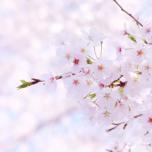 お花見しながら城ヨガしよう!大阪城SAKURA YOGA【3月25日開催】