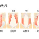 腹部の腹筋