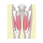 【ハムストリング】強化ヨガ筋トレ|代謝が上がる!ポーズでつらない脚をつくる