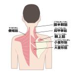 肩甲骨周辺の筋肉