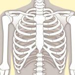 肩関節の緊張が取れ、肩のつまりが解消する「腕の動かし方」【ためになる解剖学】