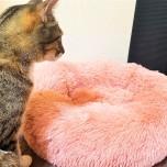 猫ベッドと猫