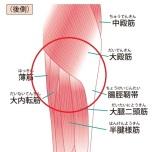 太ももの裏側の筋肉