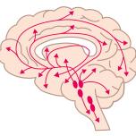 心身の免疫力維持にも効果的!瞑想と脳科学