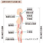 腹横筋や腸腰筋など