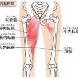 股関節内転筋