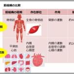 理学療法士が解説「人体で最もいらない筋肉って?」その筋肉の役割とは?